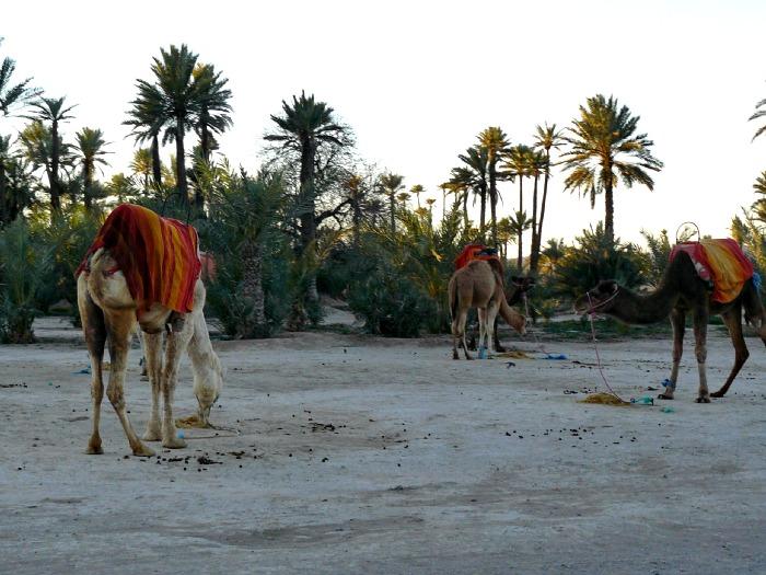 Marrakech cómo llegar