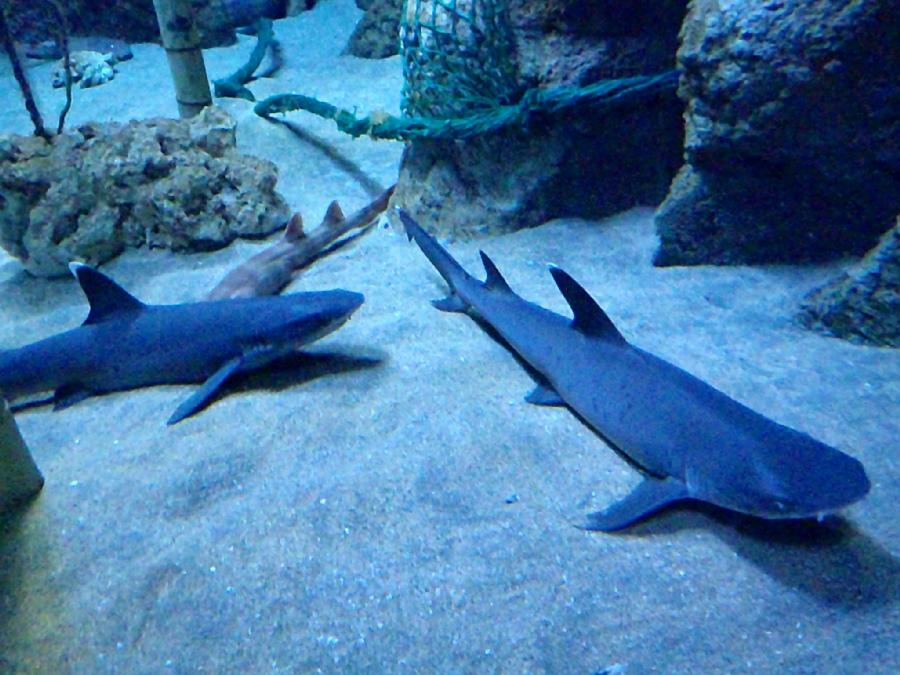 visitar el acuario de gijón