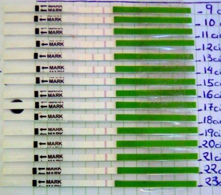 test de ovulacion positivo