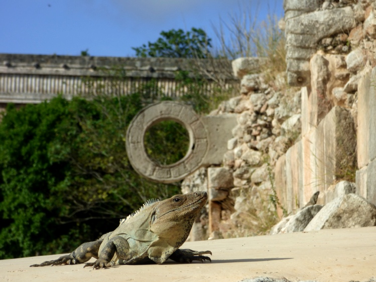 iguanas en uxmal